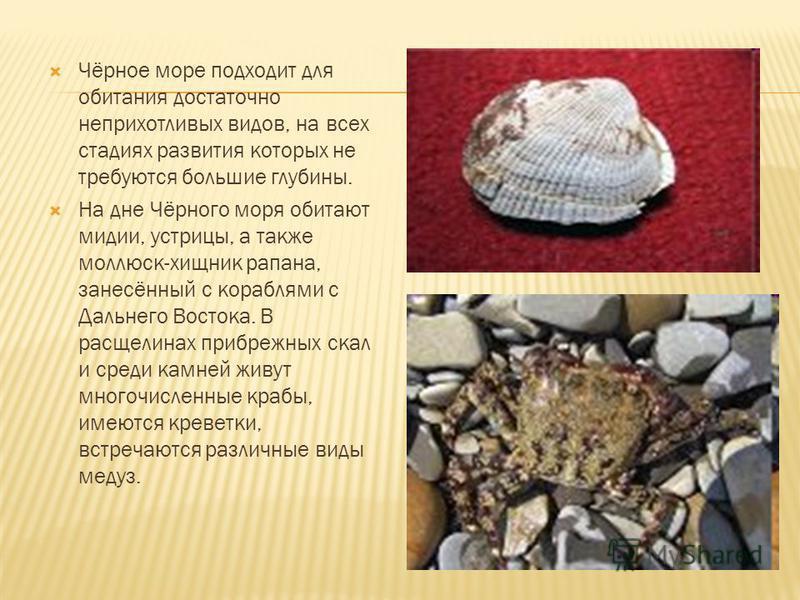 Растительный мир моря включает в себя 270 видов многоклеточных зелёных, бурых, красных донных водорослей. Фауна Чёрного моря заметно беднее, чем Средиземного. В Чёрном море обитает 2,5 тыс. видов животных (из них 500 видов одноклеточных, 160 видов по
