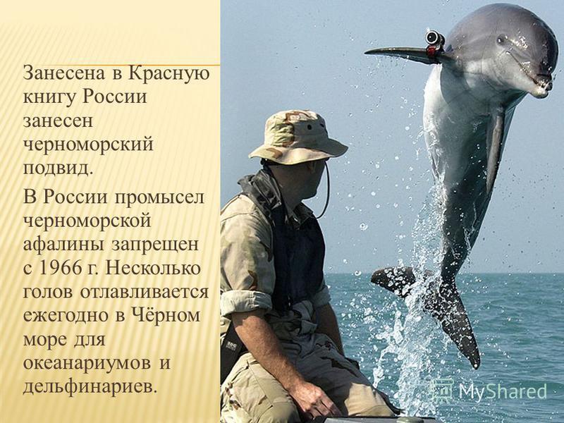 Обитание около берега и открытая вода. Вес новорожденного 11-12 кг. Вес взрослого 150400 кг. Длина новорожденного 0,85-1,3 м. Длина взрослого дельфины средней величины: 1,9-3 м, редко до 3,6 м длиной. Самцы на 10-20 см больше самок. Питание в Чёрном