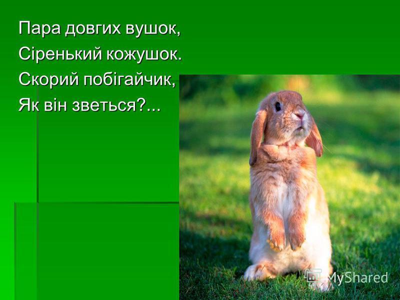 Ні, це зовсім не їжак, Хоч на тілі голки видно, Не комаха і не птах, Цю істоту звуть ….