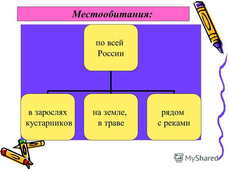 Местообитания: по всей России в зарослях кустарников на земле, в траве рядом с реками