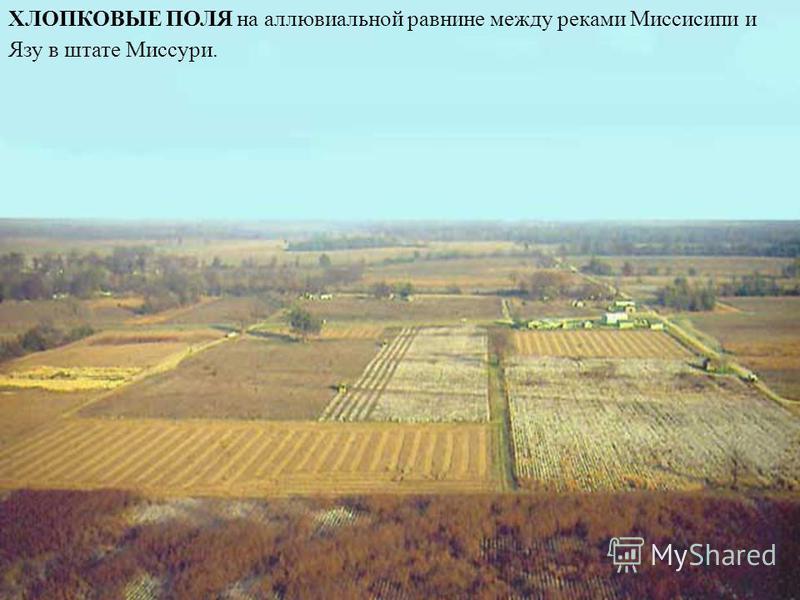 ХЛОПКОВЫЕ ПОЛЯ на аллювиальной равнине между реками Миссисипи и Язу в штате Миссури.