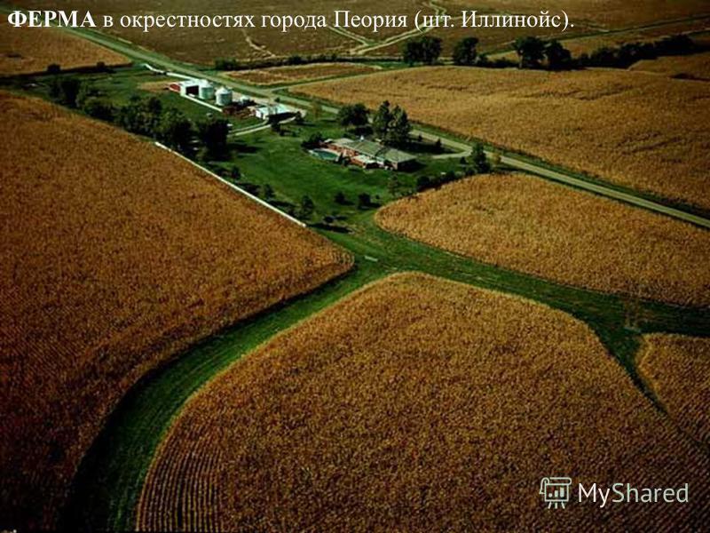 ФЕРМА в окрестностях города Пеория (шт. Иллинойс).
