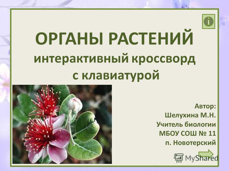 Презентацию на тему органы растений