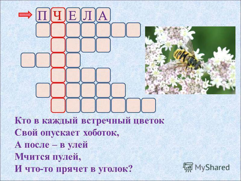 Кто в каждый встречный цветок Свой опускает хоботок, А после – в улей Мчится пулей, И что-то прячет в уголок?