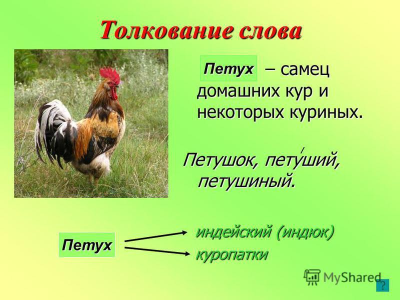 Толкование слова – самец домашних кур и некоторых куриных. Петушок, петуший, петушиный. Петух индейский (индюк) куропатки Петух