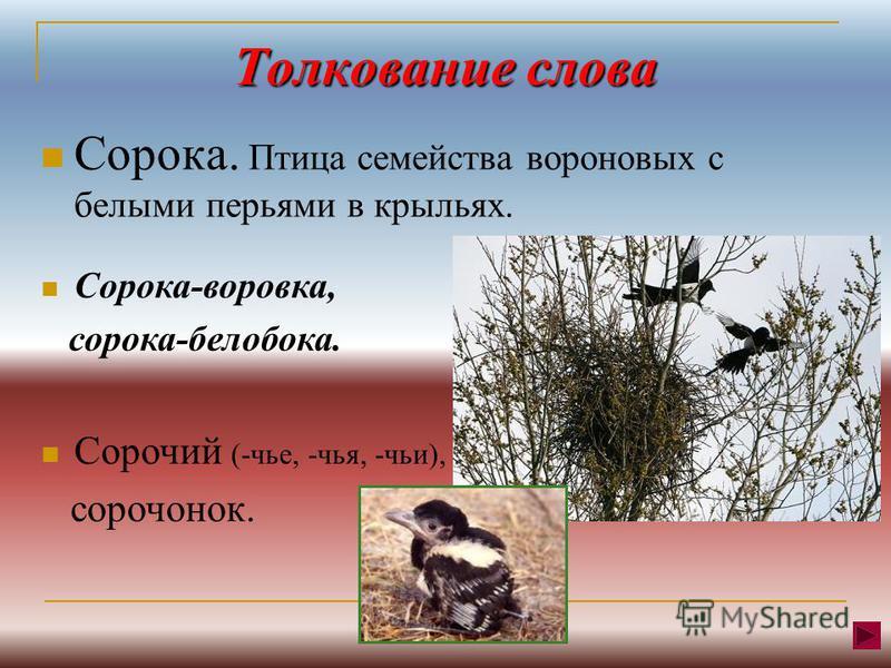 Толкование слова Сооока. Птица семейства воооновых с белыми перьями в крыльях. Сооока-вооовка, сооока-белобока. Сооочий (-чье, -чья, -чьи), сооотонок.