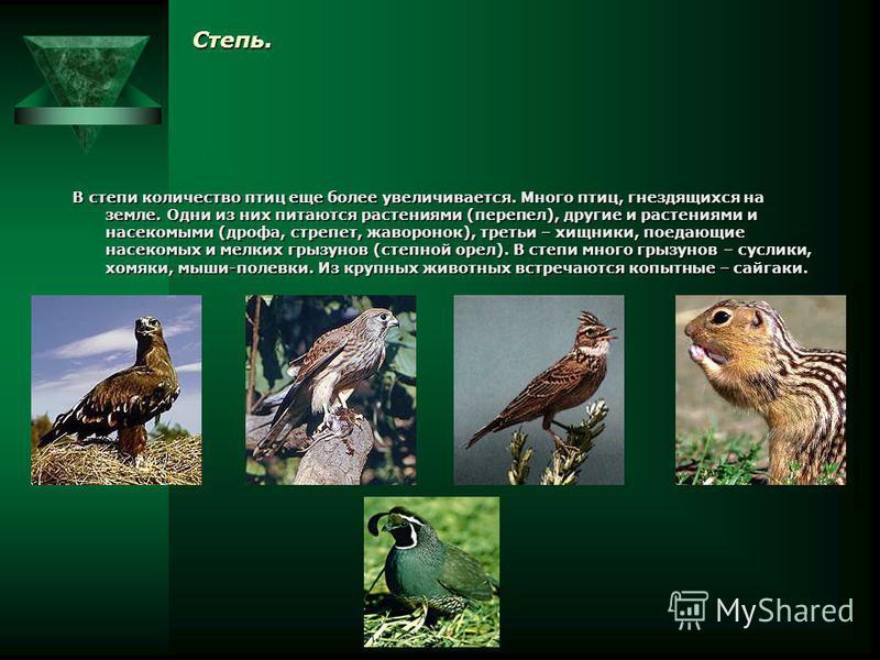 Широколиственные леса. В широколиственных лесах увеличивается число копытных: олени, косули, лоси, кабаны. Разнообразнее, чем в тайге, птицы: дрозды, тетерева, глухари.