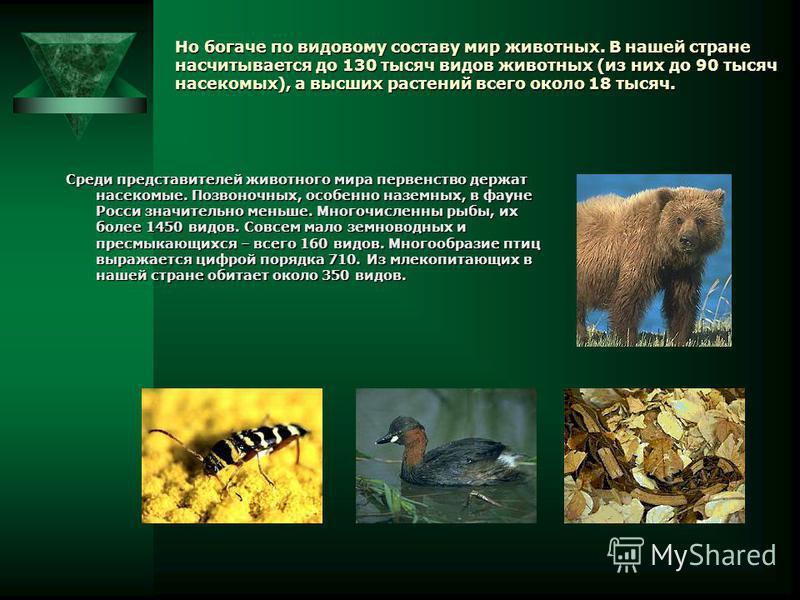 Доклад на тему растительный и животный мир россии 4342