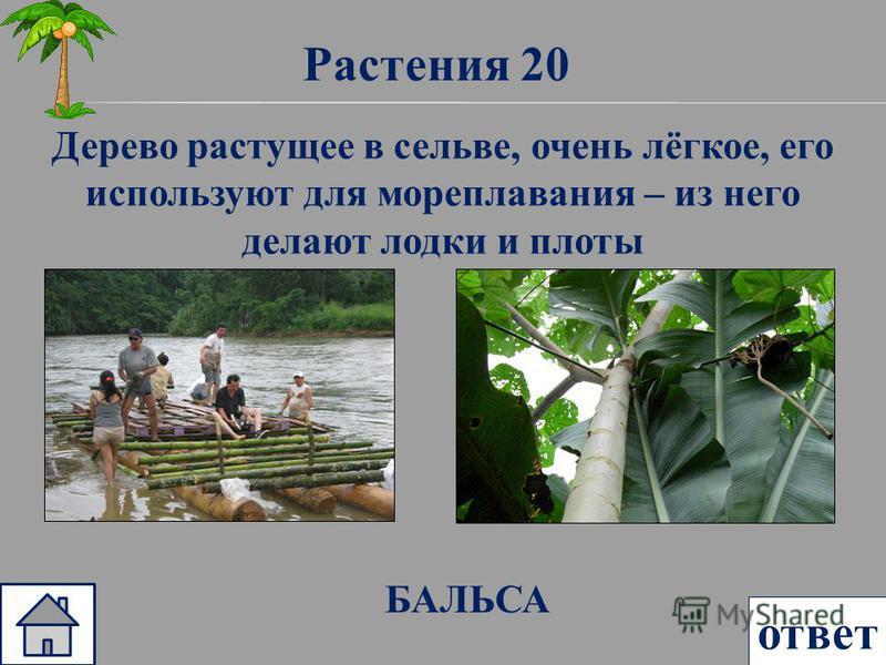Растения 20 ответ Дерево растущее в сельве, очень лёгкое, его используют для мореплавания – из него делают лодки и плоты БАЛЬСА