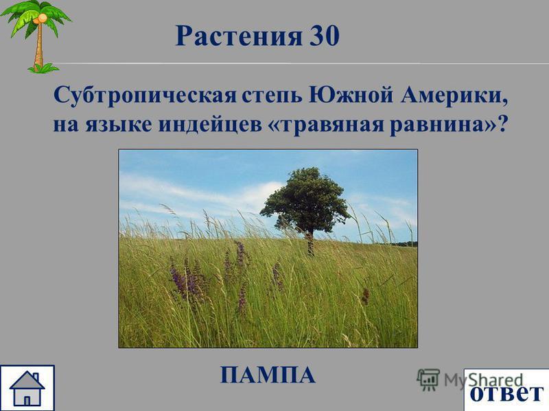 Растения 30 ответ Субтропическая степь Южной Америки, на языке индейцев «травяная равнина»? ПАМПА