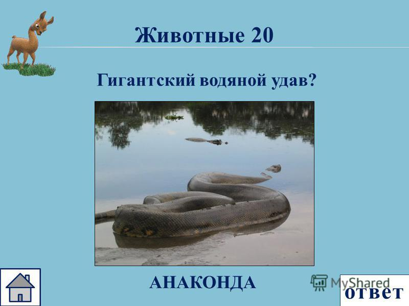 ответ Животные 20 Гигантский водяной удав? АНАКОНДА