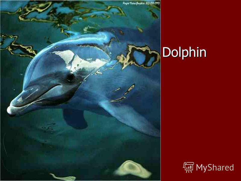 Dolphin Dolphin
