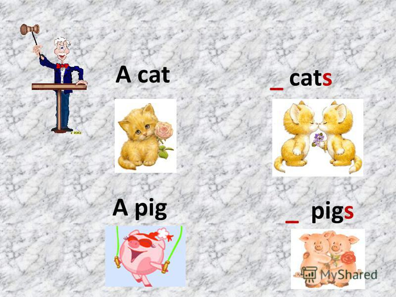 A cat _ cats A pig _ pigs