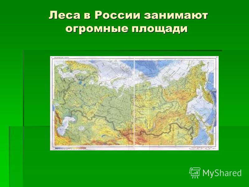Леса в России занимают огромные площади Леса в России занимают огромные площади