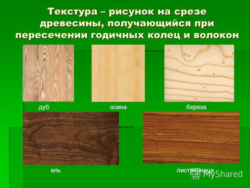Текстура – рисунок на срезе древесины, получающийся при пересечении годичных колец и волокон береза дуб осина береза ель лиственница