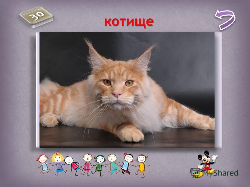 Какое из существительных мужского рода? страшилище чудище котище посмешище пепелище Какое из существительных мужского рода? страшилище чудище котище посмешище пепелище котище