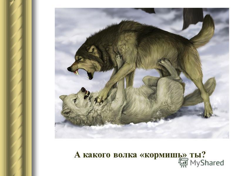 А какого волка «кормишь» ты?