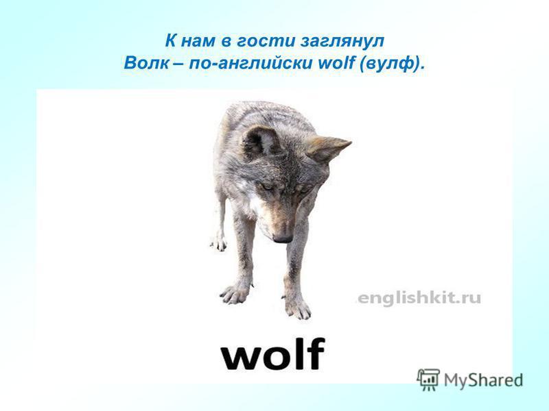 К нам в гости заглянул Волк – по-английски wolf (вулф).