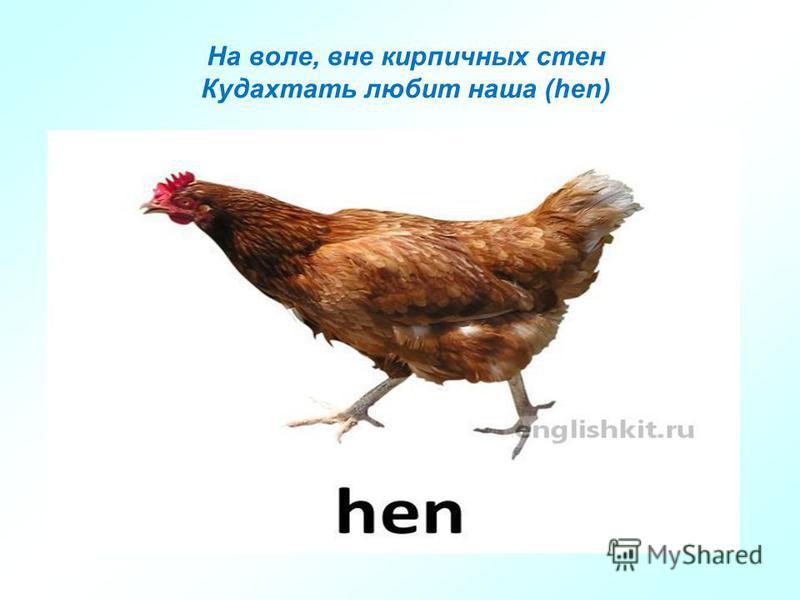 На воле, вне кирпичных стен Кудахтать любит наша (hen)