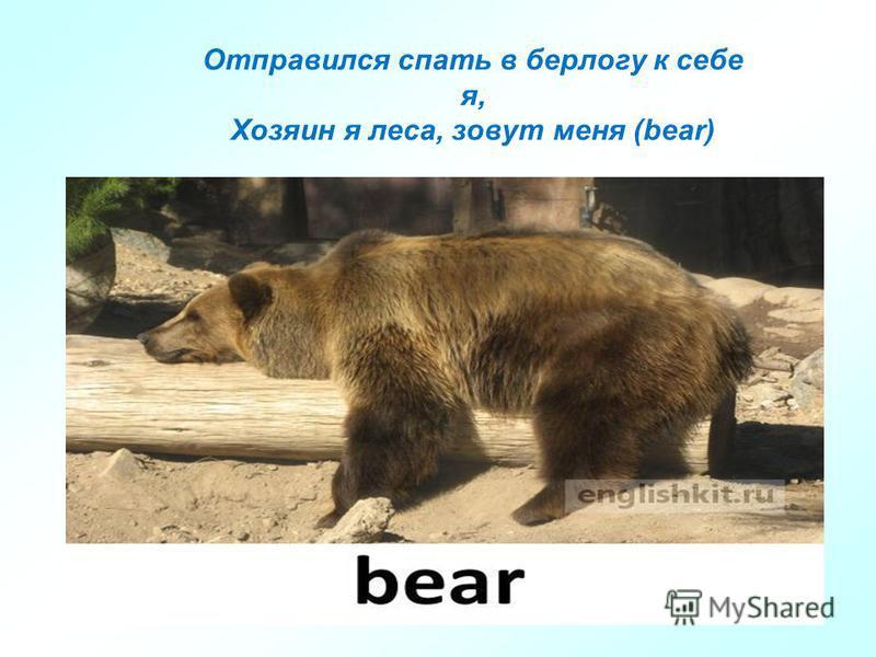 Отправился спать в берлогу к себе я, Хозяин я леса, зовут меня (bear)
