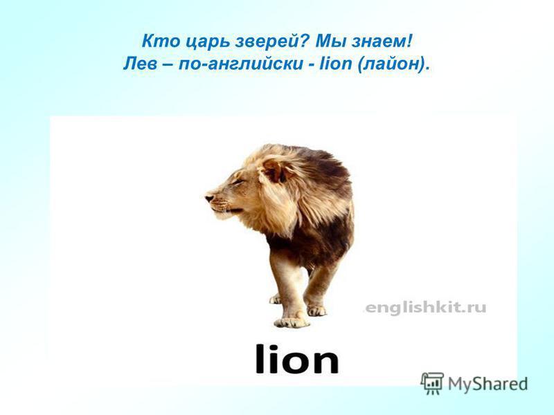 Кто царь зверей? Мы знаем! Лев – по-английски - lion (район).
