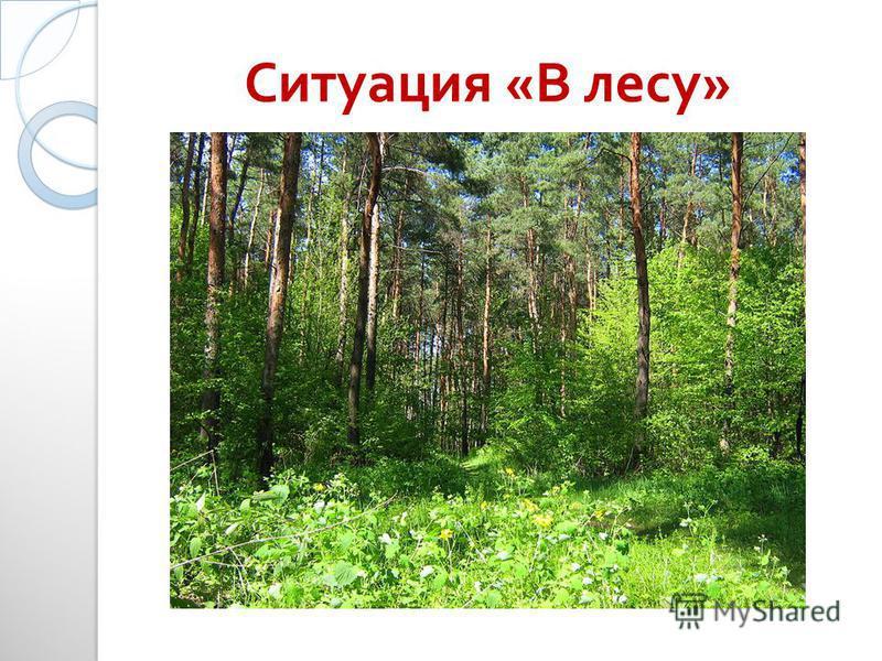 Ситуация « В лесу »