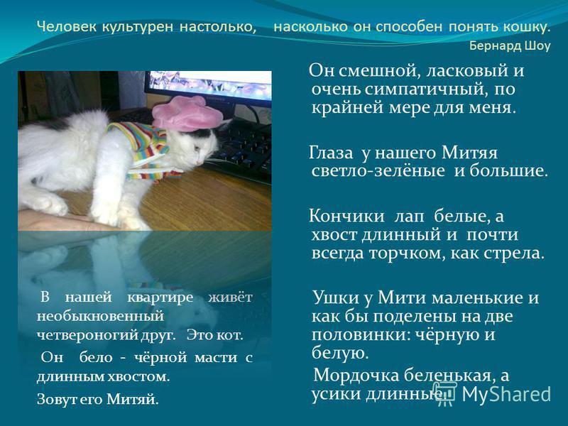 Человек культурен настолько, насколько он способен понять кошку. Бернард Шоу В нашей квартире живёт необыкновенный четвероногий друг. Это кот. Он бело - чёрной масти с длинным хвостом. Зовут его Митяй. Он смешной, ласковый и очень симпатичный, по кра