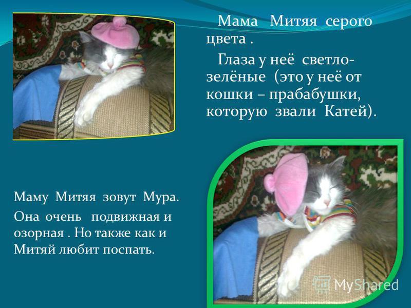 Маму Митяя зовут Мура. Она очень подвижная и озорная. Но также как и Митяй любит поспать. Мама Митяя серого цвета. Глаза у неё светло- зелёные (это у неё от кошки – прабабушки, которую звали Катей).