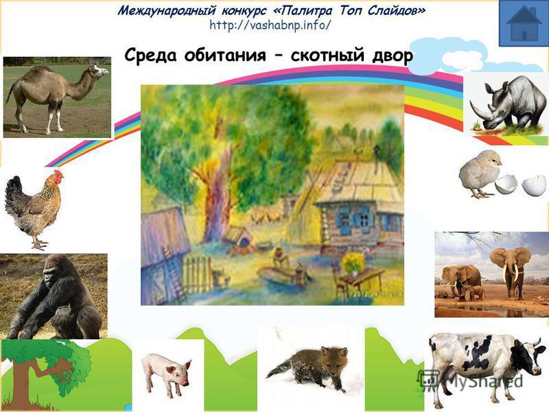 Международный конкурс «Палитра Топ Слайдов» http://vashabnp.info/ Среда обитания - север