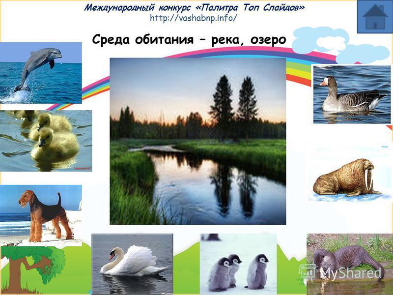 Международный конкурс «Палитра Топ Слайдов» http://vashabnp.info/ Среда обитания – скотный двор