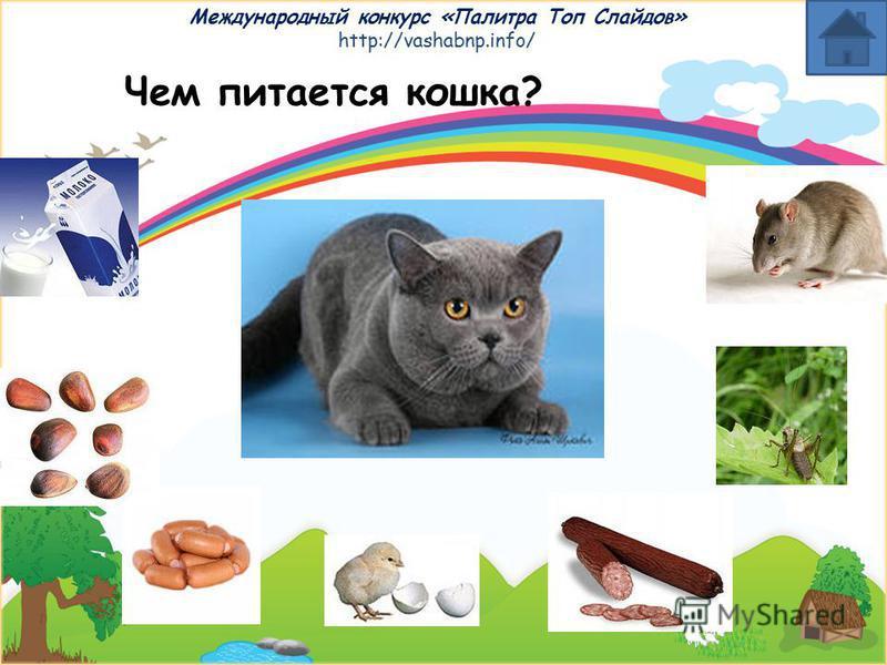 Международный конкурс «Палитра Топ Слайдов» http://vashabnp.info/ Чем питаются животные? Выбери животное