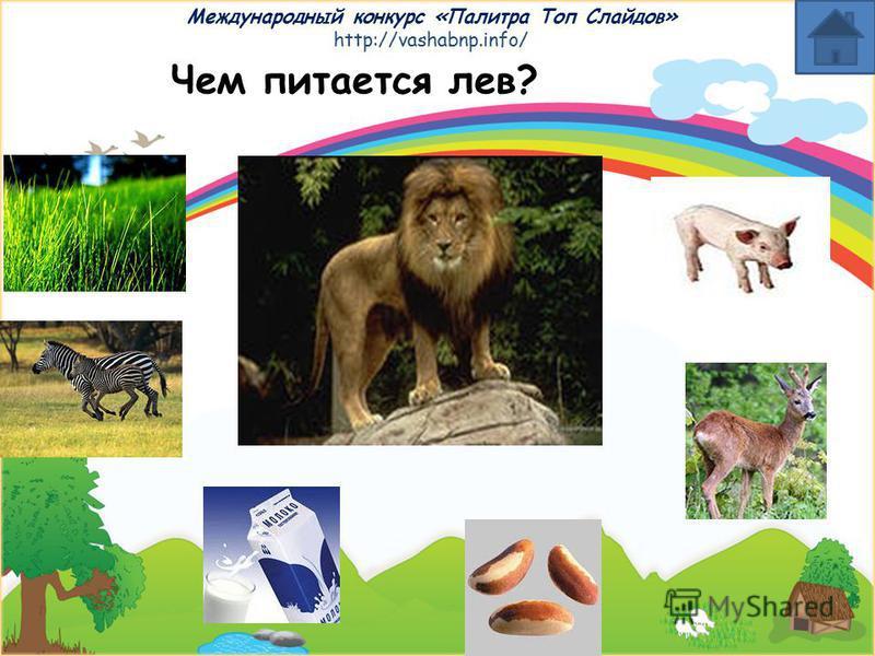 Международный конкурс «Палитра Топ Слайдов» http://vashabnp.info/ Чем питается кошка?