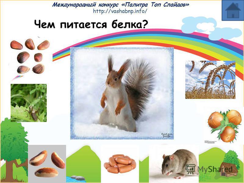 Международный конкурс «Палитра Топ Слайдов» http://vashabnp.info/ Чем питается лев?