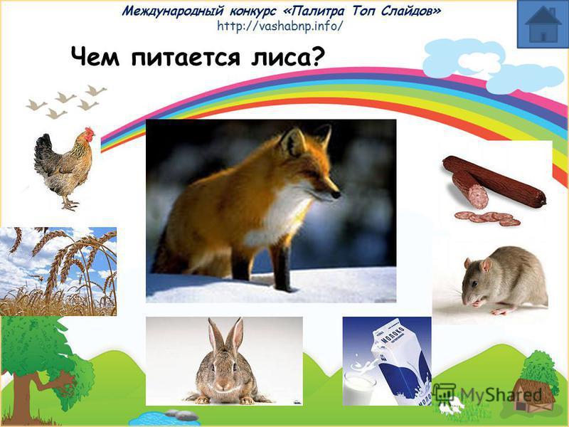 Международный конкурс «Палитра Топ Слайдов» http://vashabnp.info/ Чем питается коза?