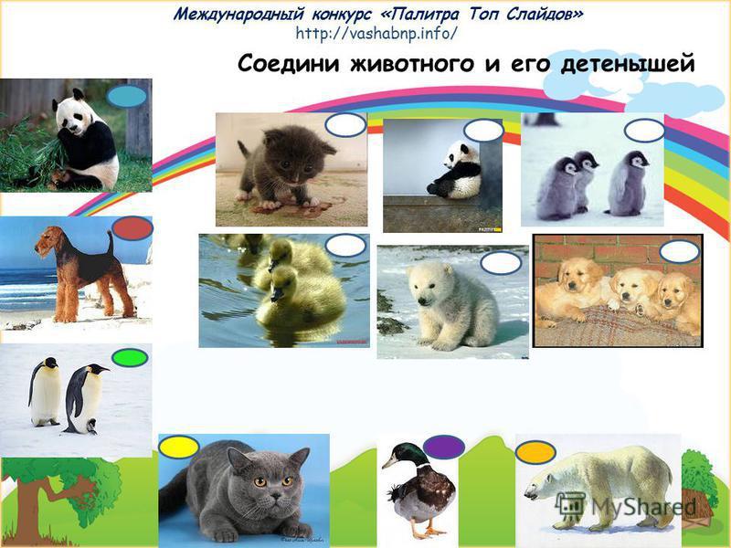 Международный конкурс «Палитра Топ Слайдов» http://vashabnp.info/ Это животные жарких стран