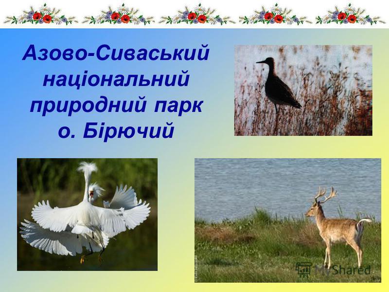 Азово-Сиваський національний природний парк о. Бірючий