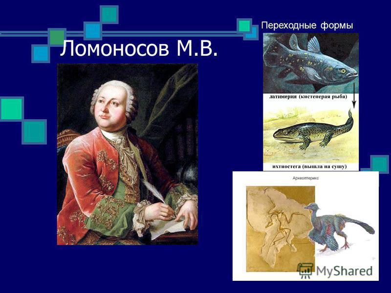 Ломоносов М.В. Переходные формы