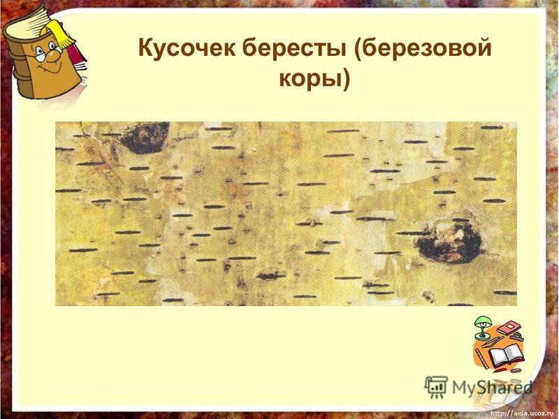 Кусочек бересты (березовой коры)