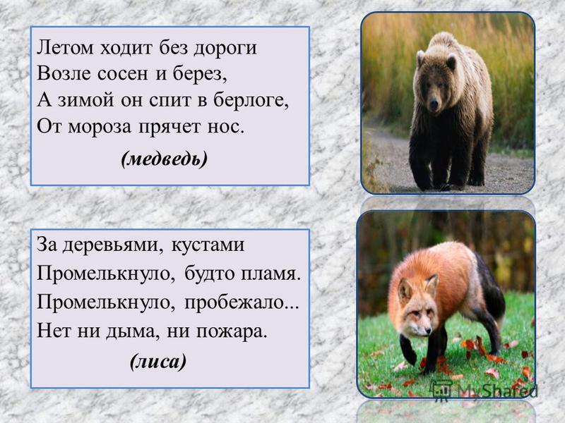 Летом ходит без дороги Возле сосен и берез, А зимой он спит в берлоге, От мороза прячет нос. За деревьями, кустами Промелькнуло, будто пламя. Промелькнуло, пробежало... Нет ни дыма, ни пожара. (медведь) (лиса)