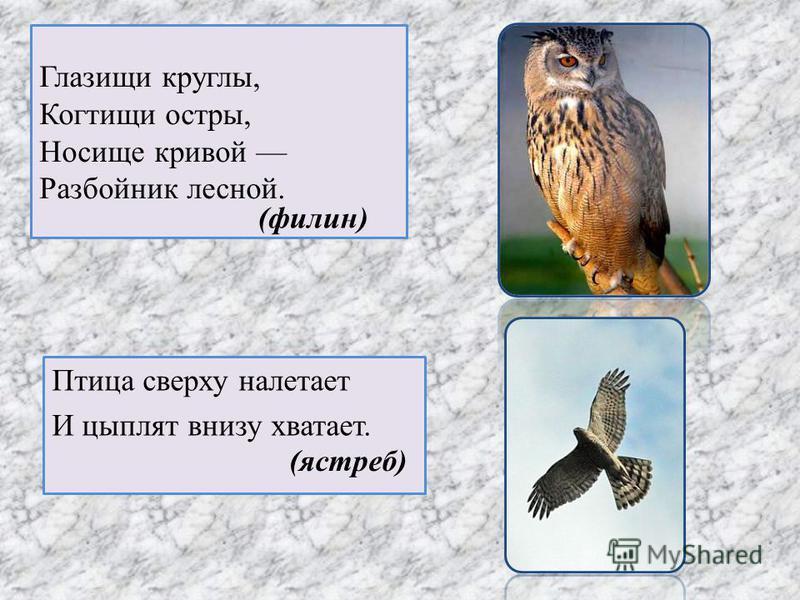 Глазищи круглы, Когтищи остры, Носище кривой Разбойник лесной. Птица сверху налетает И цыплят внизу хватает. (филин) (ястреб)