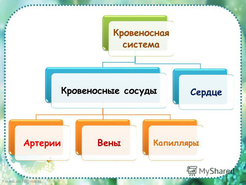 FokinaLida.75@mail.ru Кровеносная система Кровеносные сосуды АртерииВены Капилляры Сердце
