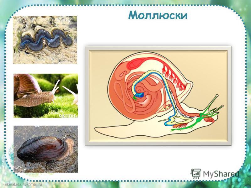 FokinaLida.75@mail.ru Моллюски
