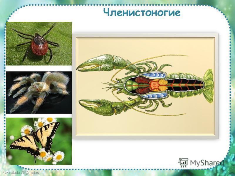 FokinaLida.75@mail.ru Членистоногие