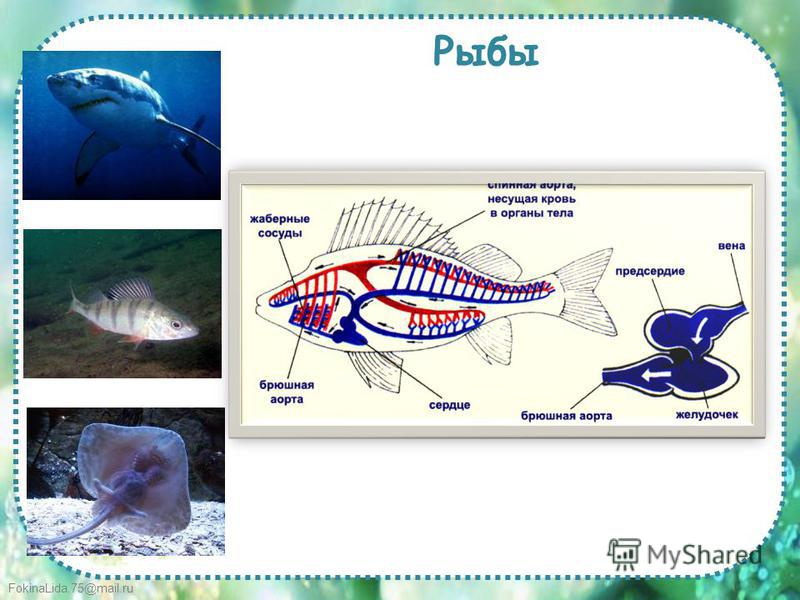 FokinaLida.75@mail.ru Рыбы