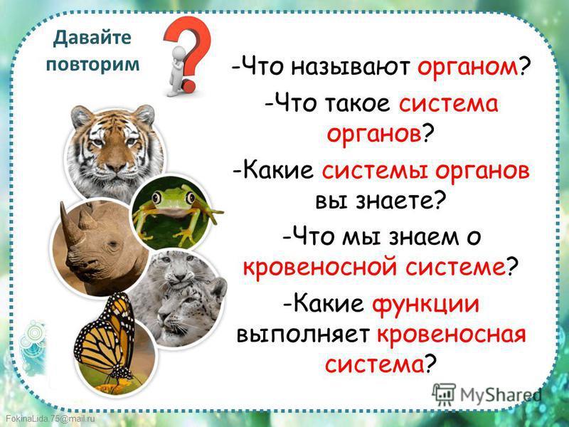 FokinaLida.75@mail.ru Давайте повторим -Что называют органом? -Что такое система органов? -Какие системы органов вы знаете? -Что мы знаем о кровеносной системе? -Какие функции выполняет кровеносная система?
