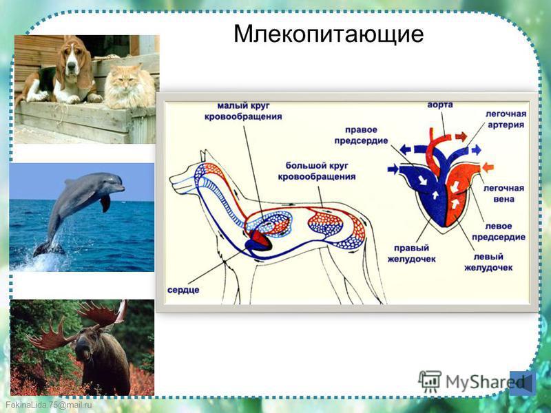 FokinaLida.75@mail.ru Млекопитающие