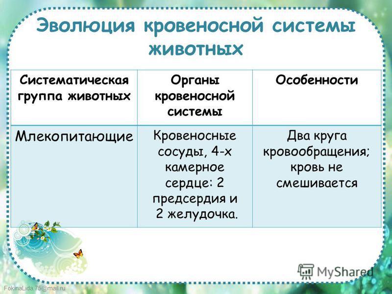 FokinaLida.75@mail.ru Эволюция кровеносной системы животных Систематическая группа животных Органы кровеносной системы Особенности Млекопитающие Кровеносные сосуды, 4-х камерное сердце: 2 предсердия и 2 желудочка. Два круга кровообращения; кровь не с