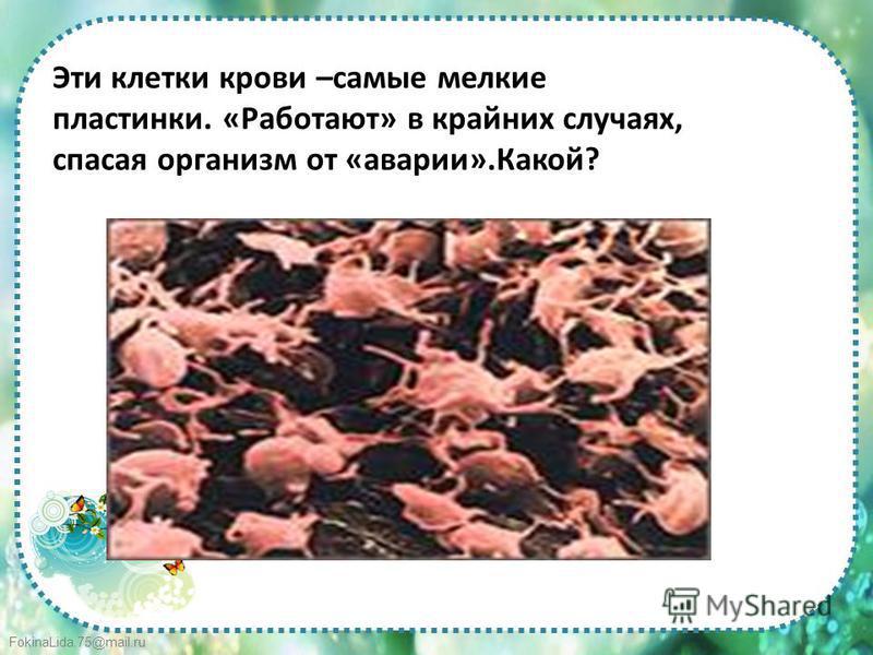 FokinaLida.75@mail.ru Эти клетки крови –самые мелкие пластинки. «Работают» в крайних случаях, спасая организм от «аварии».Какой?