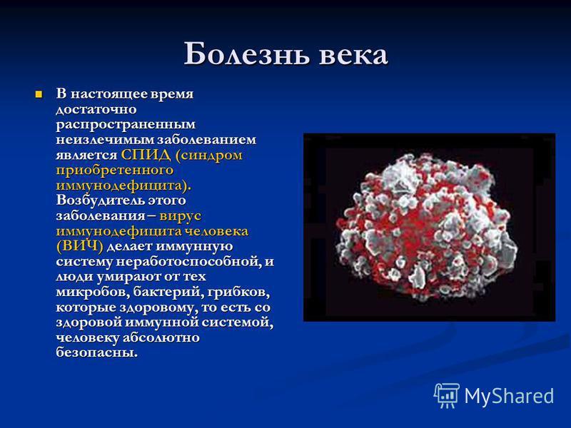 Болезнь века В настоящее время достаточно распространенным неизлечимым заболеванием является СПИД (синдром приобретенного иммунодефицита). Возбудитель этого заболевания – вирус иммунодефицита человека (ВИЧ) делает иммунную систему неработоспособной,