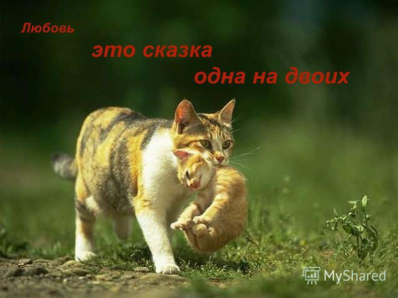 Любовь это сказка одна на двоих